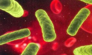 Стрептококковая инфекция в моче