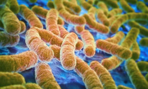Кишечная палочка — escherichia coli (эшерихия коли)