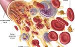 Почему повышается уровень лейкоцитов в моче во время беремнности