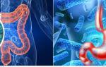 Клебсиелла (klebsiella pneumoniae) в моче — причины заболевания
