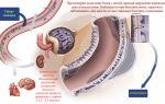 Повышенные показатели белка в моче во время беременности