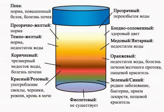 График цвета мочи