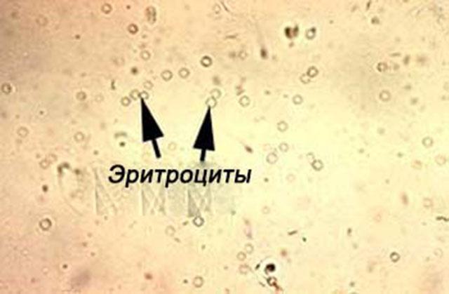 Молекулы красных кровяных телец