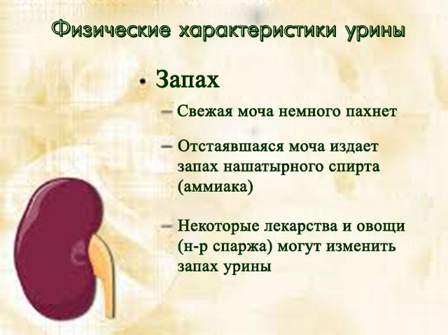 Запах - одна из хакартеристик урины