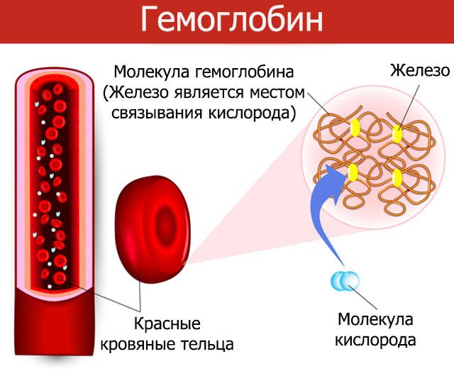 Гемоглобин моча