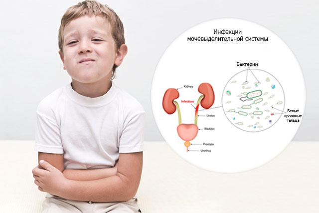 Бактерия в моче у ребенка