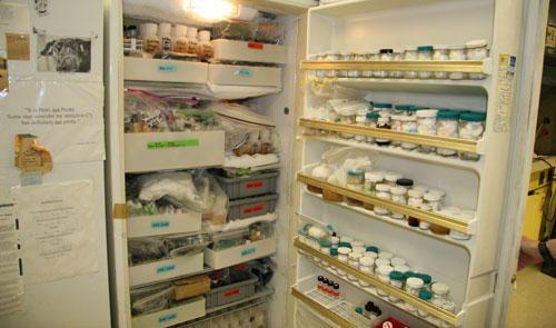 Анализы в холодильнике