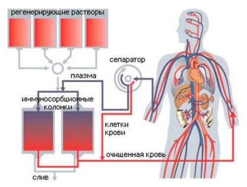 Что происходит в организме