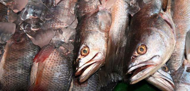 Many fishes dating website - Emergency Preparedness